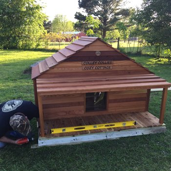 custom built puppy house