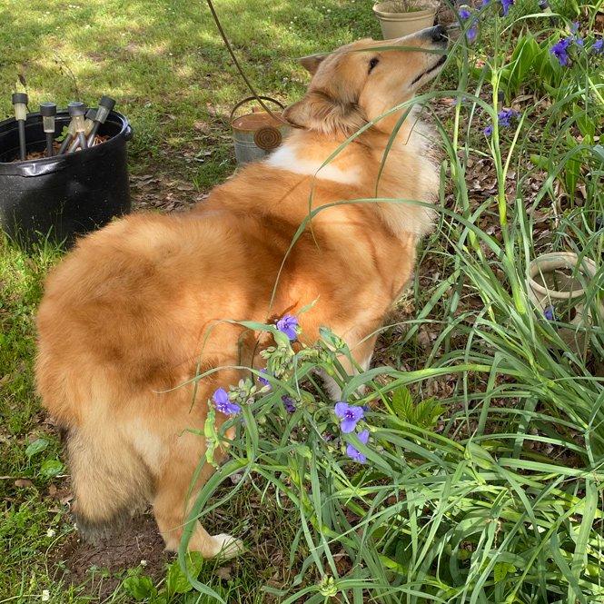 Skye smelling flowers